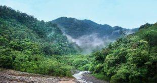 صورة اهمية الغابة , فوائد الغابات واهميتها