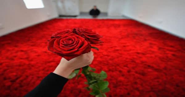 صورة تفسير رؤية الورد الاحمر في المنام , ورد المحبه في المنام