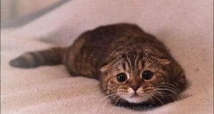 صورة علامات مرض القطط , اعراض جرثومة القطط