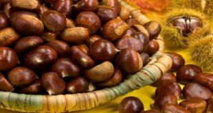 صورة فوائد فاكهة ابو فروة , ما هي فوائد ابو فروة