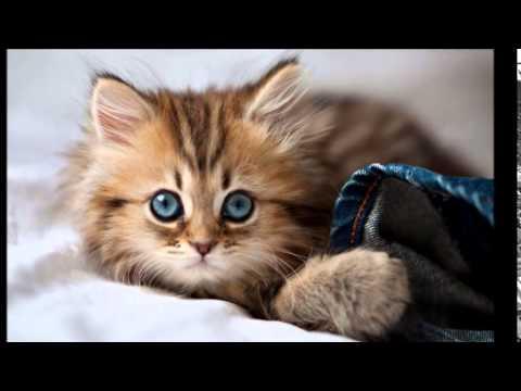 صورة اجمل القطط الصغيرة , انواع القطط الصغيره