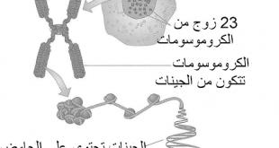 تحليل الكروموسومات للزوجين