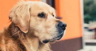 تفسير الاحلام رؤية الكلاب