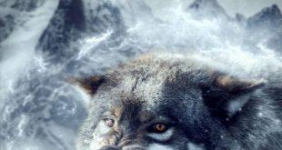 صور تفسير حلم ذئب ، عمري ما كنت اتصور ان دا التفسير