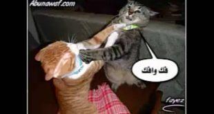 أروع كوميكس للقطط ,صور مضحكة عن القطط